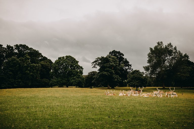 Destination Wedding Photographer - Swinton Park